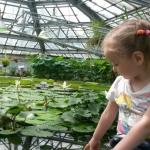 Проведение экскурсии в Ботанический сад Санкт-Петербурга