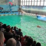 В Санкт-Петербургском дельфинарии
